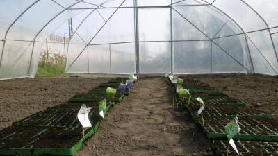 Tunel, nasiona i dżdżownice